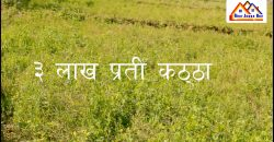 4.5 Bigha land is for sale, 3 lakh per Kattha