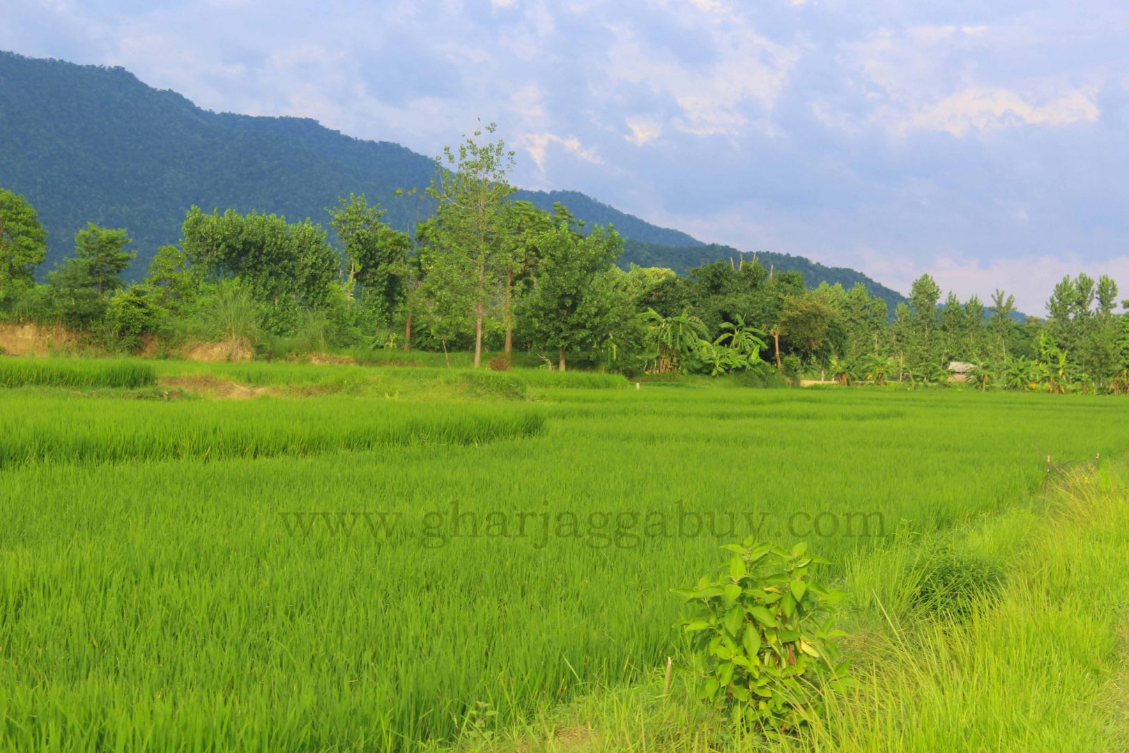 10 Kattha land for sale near Bardaghat, Nawalparasi, Nepal