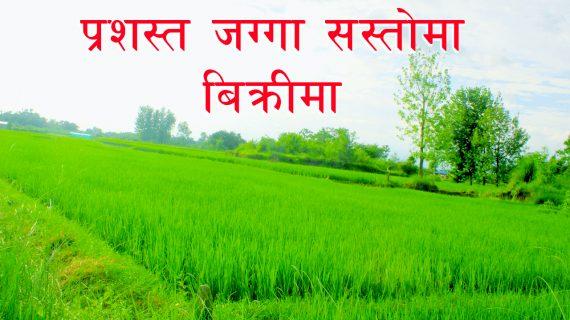 10 Kattha land for sale near Bardaghat, Nawalparasi, Nepal
