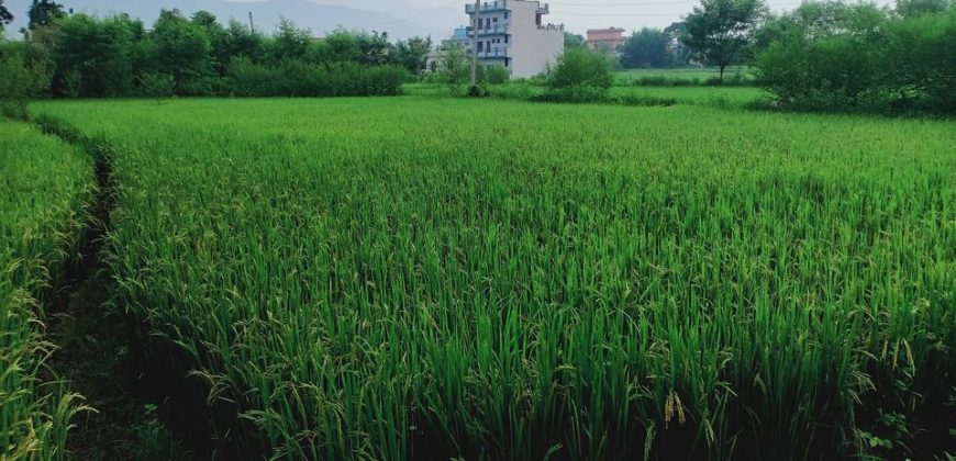 Land for sale in Butwal-12, Rupandehi, Nepal