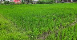 Land for sale in Itahari, Sunsari Nepal