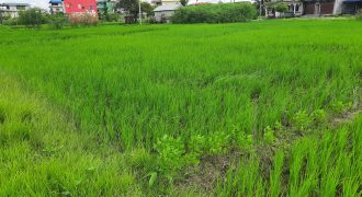 Land for sale in Itahari, Sunsari Nepal