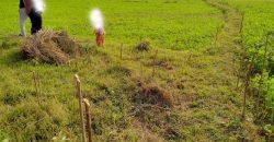 Land for sale in Devdaha-2, Asnaiya Rupandehi