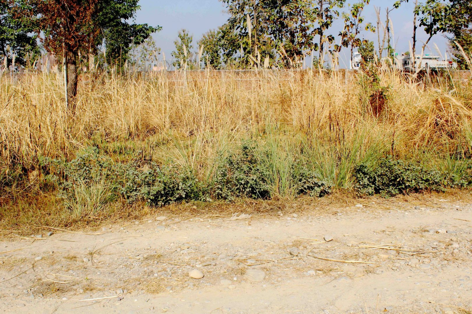 Cheap land for sale in Tilottama-4, Dingarnagar, Rupandehi Nepal
