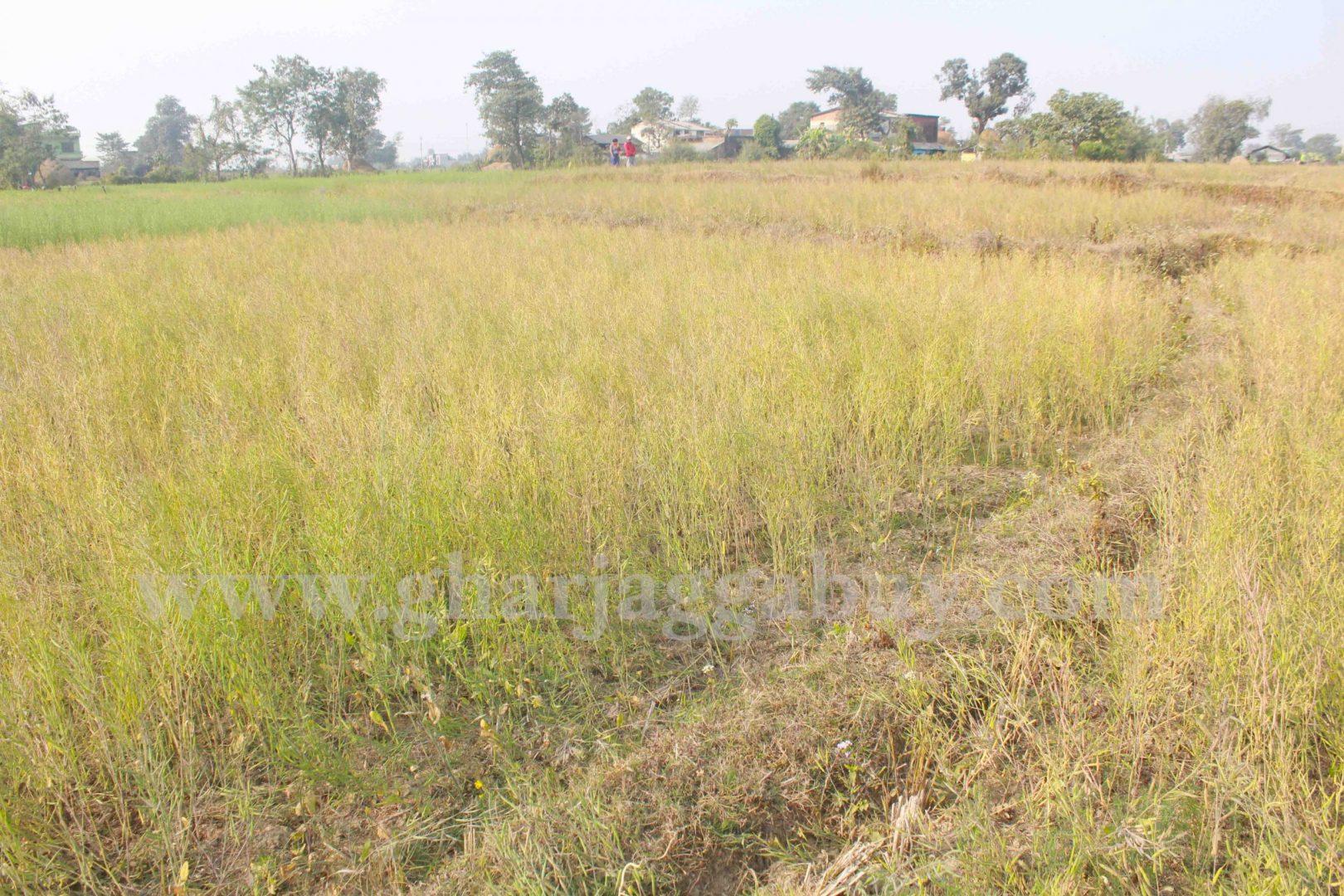 Cheap land for sale in Nawalparasi, Sunawal Nepal