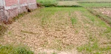 Land for sale in Murgiya, Rupandehi, Nepal