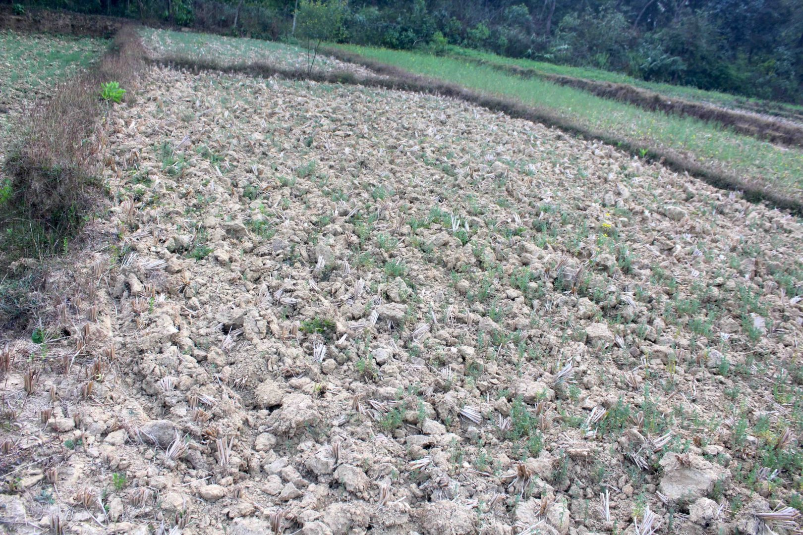 Cheap house and land total 1.5 kattha is for sale in Tilottma Rupandehi.