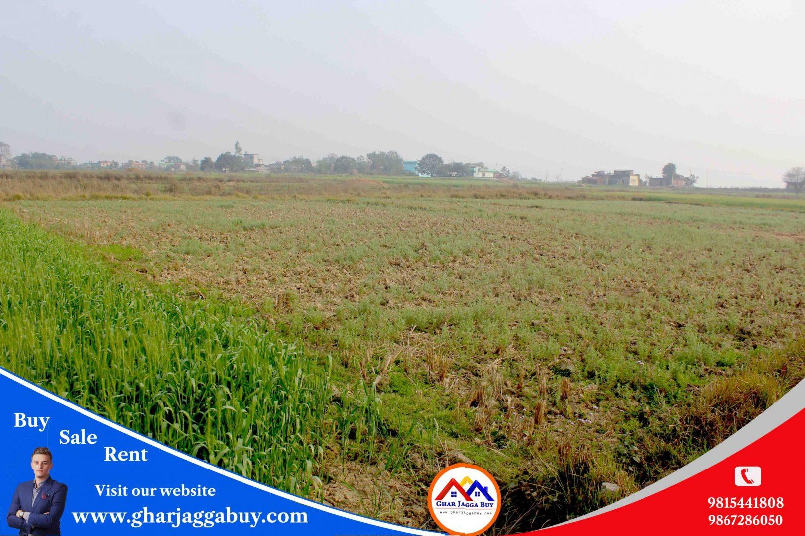 Land for sale in Tilottama, Rupandehi Nepal
