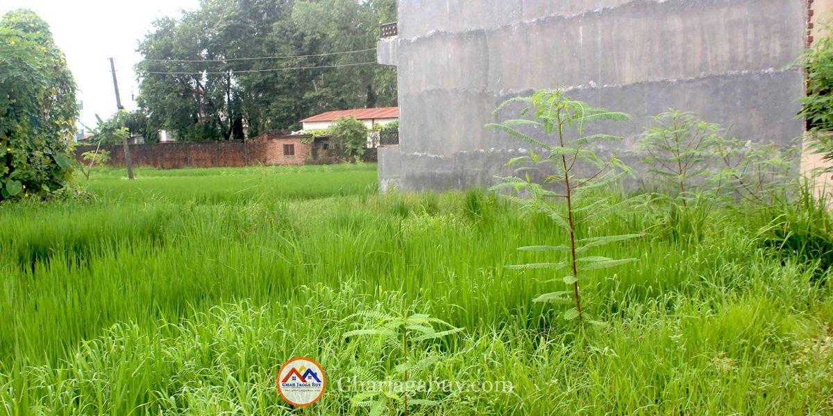 Ghaderi for sale in Tilottama-7 Bhalwari Rupandehi Rupandehi